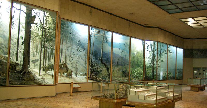 Россия тайга / леса умеренного пояса   достопримечательности и города Музей Ильменского запеведника - биологический зал